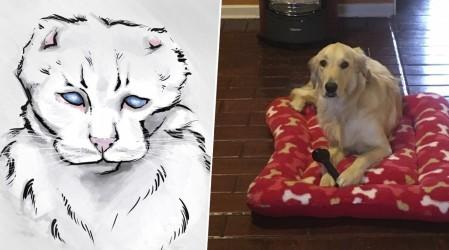Especial Mascotas: Destacamos camas para animales a ilustraciones personalizadas en Emprendedores Mega