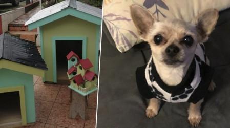 Especial mascotas: Desde casas para ellos hasta peluquería canina En Emprendedores Mega