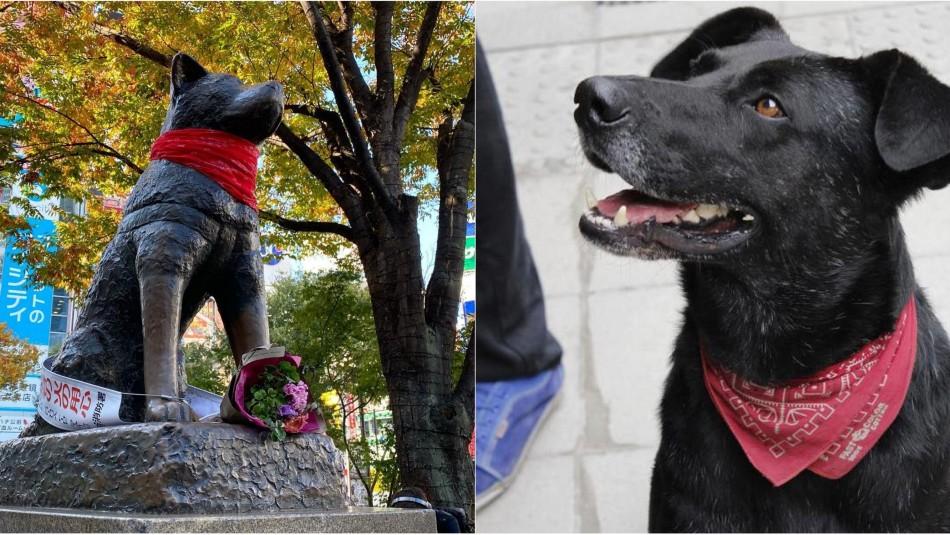 Chilenos utilizaron estatua de Hachiko en Japón para homenajear a perro símbolo de las marchas