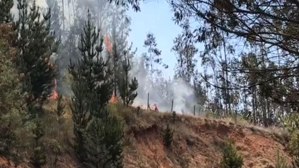 Alerta Roja regional en Valparaíso: 6 incendios se mantienen activos