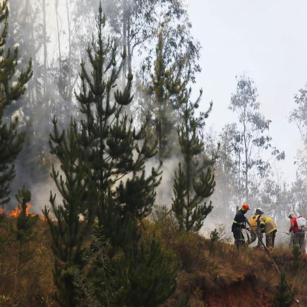 Incendios forestales en Chile: Onemi reporta que 10 siniestros continúan activos