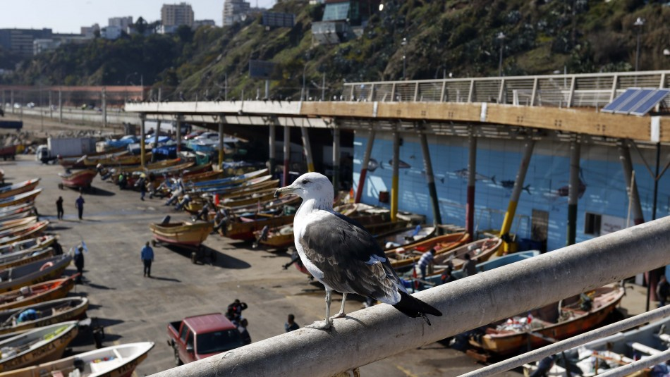 Valparaíso principalmente soleado: Revisa el pronóstico del tiempo
