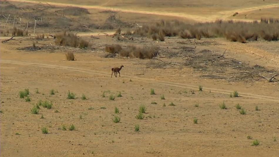 La sequía golpea duramente y podría secar el lago Peñuelas