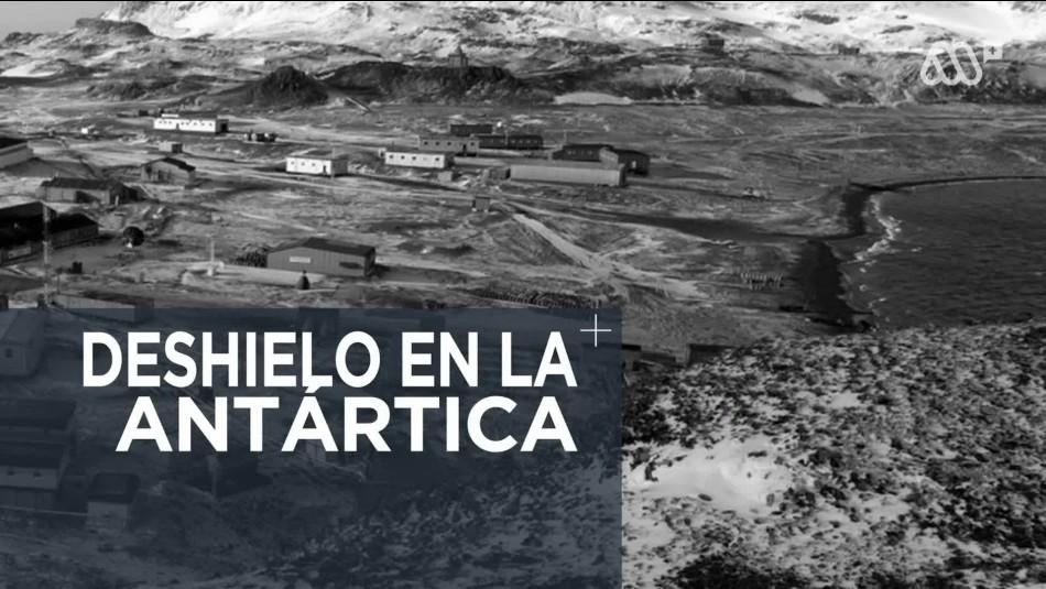Preocupación por el acelerado derretimiento de los hielos en la Antártica chilena