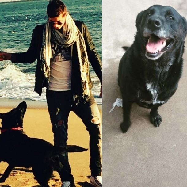 Así es la nueva vida de Nala: La inseparable perrita de Emiliano Sala a un año de su muerte