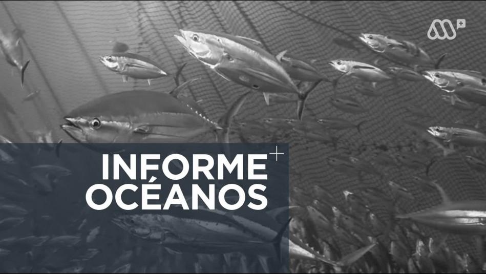 ¿Cómo mejorar la gestión de los recursos marinos?