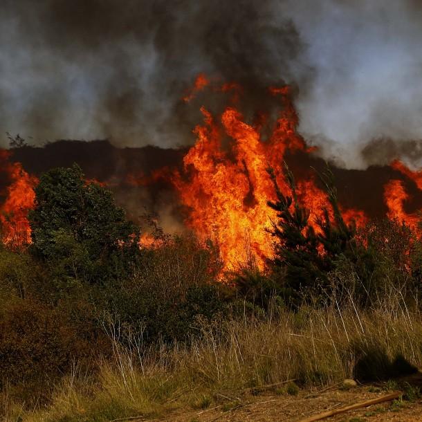 Declaran Alerta Roja en Talca por incendio forestal cercano a sectores habitados