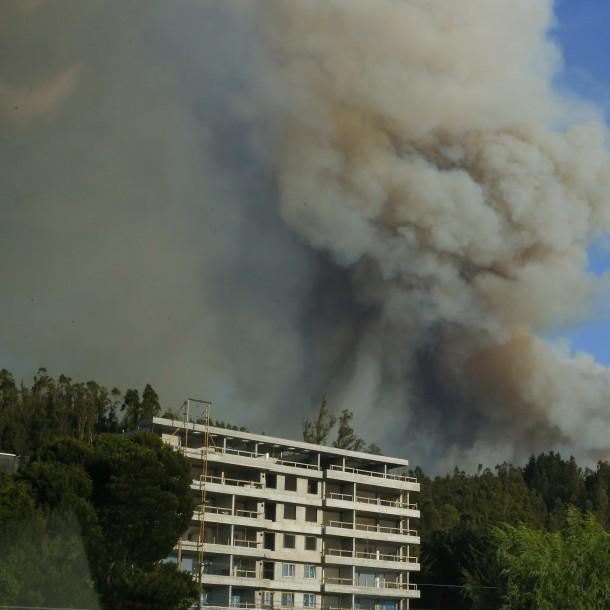 Incendios forestales en región del Biobío: Se han consumido 1.880 hectáreas por el fuego