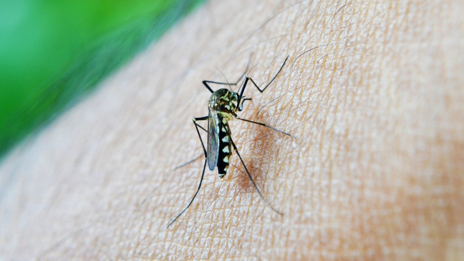 Confirman presencia de dos casos importados  de malaria en región de Tarapacá