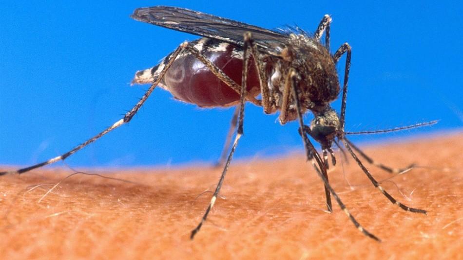 Confirman dos casos importados de malaria en la región de Tarapacá
