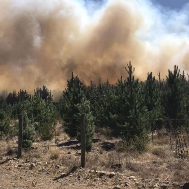 Decretan Alerta Roja para comuna de Tucapel por incendio forestal que amenaza