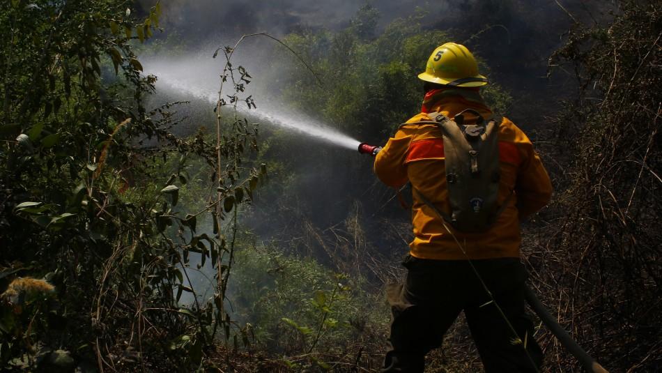 Declaran Alerta Roja en comuna de Victoria por incendio forestal: Al menos dos casas han sufrido daños