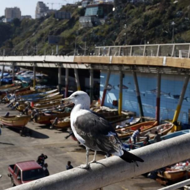 Valparaíso con jornada parcial: Revisa el pronóstico del tiempo