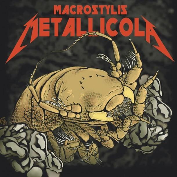 Científicos descubren nuevo crustáceo y lo llaman Metallica en honor a la banda de rock