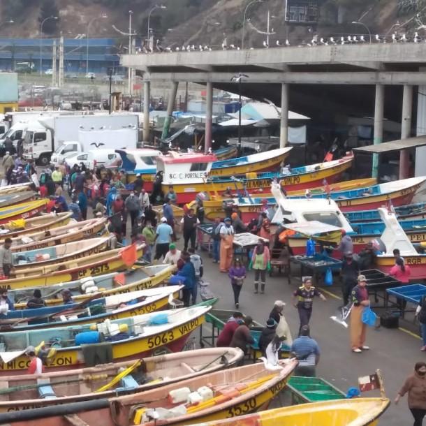 Registran largas filas para comprar pescados y mariscos en caleta de Valparaíso
