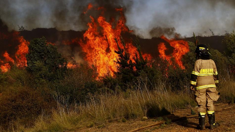 Declaran Alerta Roja por incendio forestal que amenaza a sectores poblados en Lumaco
