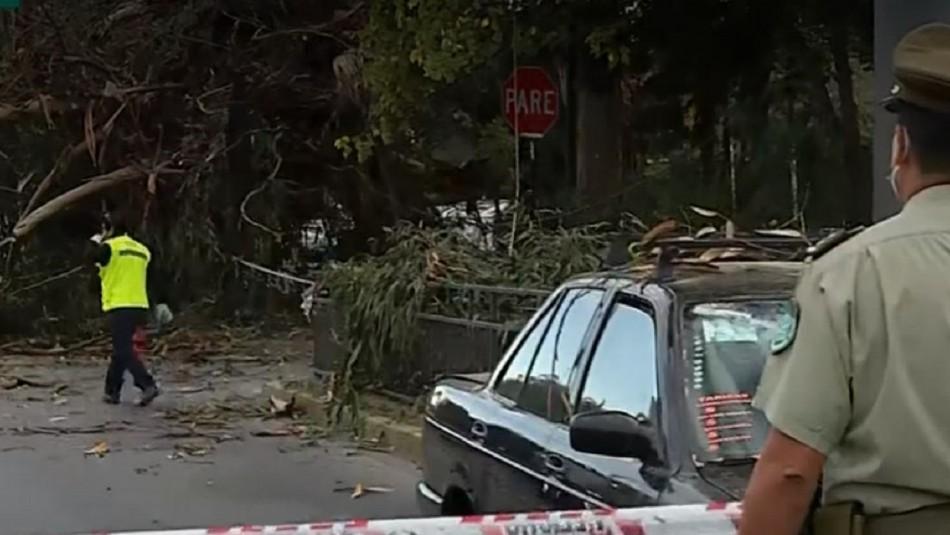 Caída de árbol provocó accidente de tránsito entre taxi y motociclista en La Reina