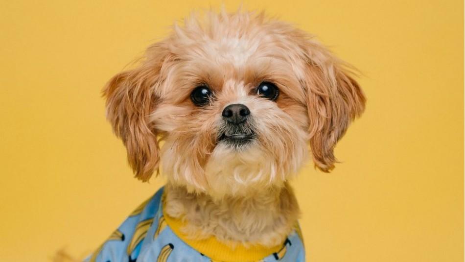 ¿Por qué mi perro tiene la nariz fría?: Te sorprenderá lo que dicen los expertos