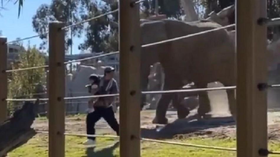 Quería una foto: Hombre se mete con su pequeña hija a jaula de los elefantes en zoológico