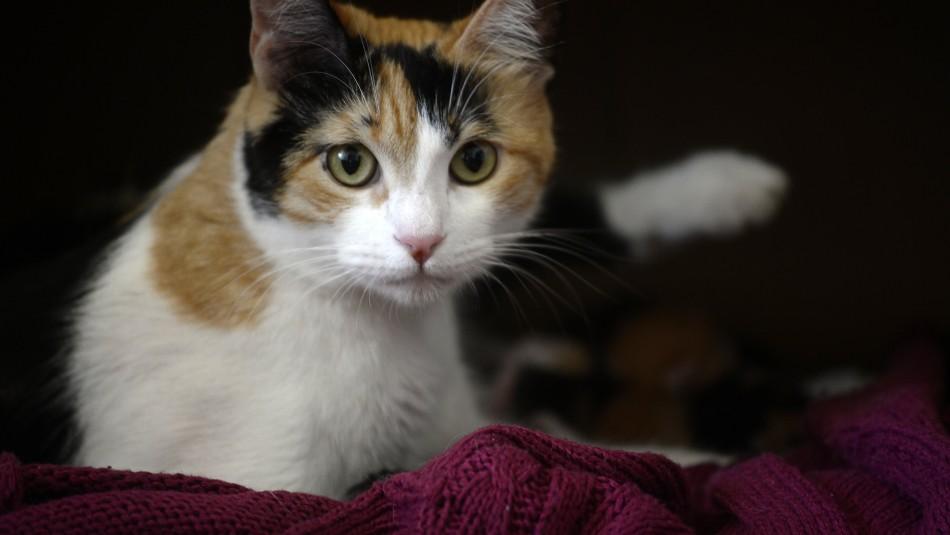 Retiran del mercado comida de gatos que genera problema de salud a los animales