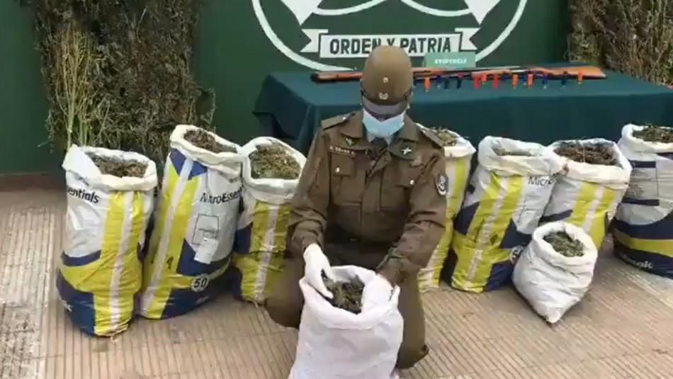 Decomiso de casi 230 kilos de marihuana deja cinco detenidos en Colbún
